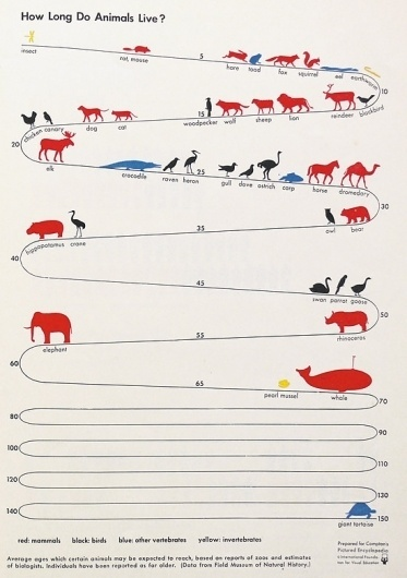 We Love Infographics — How long do animals live? by Otto Neurath #dataviz #infographics #otto #we #illustration #isotype #love #science #neurath