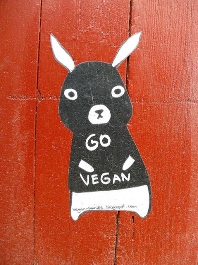 5660184567_db553a01a7_z.jpg (480×640) #bunny #vegan
