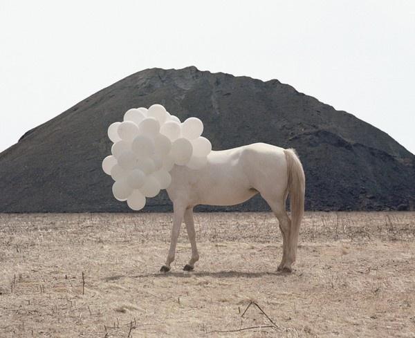 Andrea Galvani (1) #horse #white #balloons
