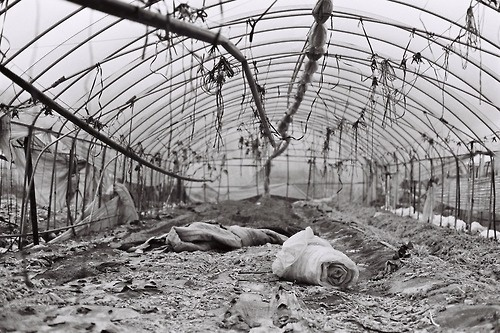 From the series Dead Land - #3
