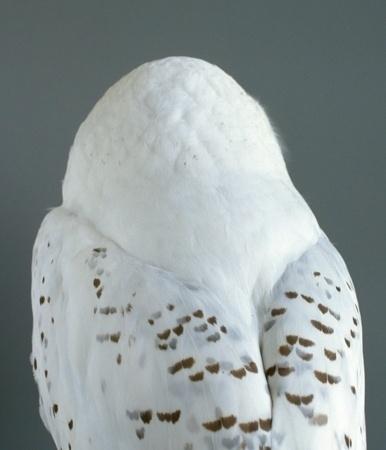 Audrey Corregan #owl #bird #photography #corregan #audrey