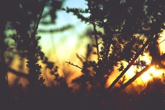 LOS ANGELES - Navis Photography #sun #photography