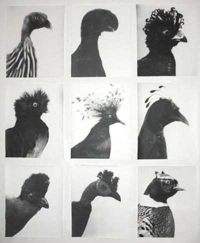 Modcult #archive #photography #bird