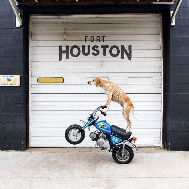Photo By Theron Humphrey #typography #dog