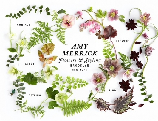AMY MERRICK : —• —— • — — • — — • — #nature #web #floral