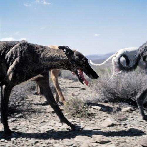 tumblr_lpvll1RoX31qzh19go1_500.jpg 500 × 500 Pixel #photography #dog