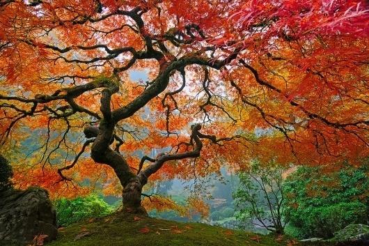 uQQIm.jpg (950×633) #colors