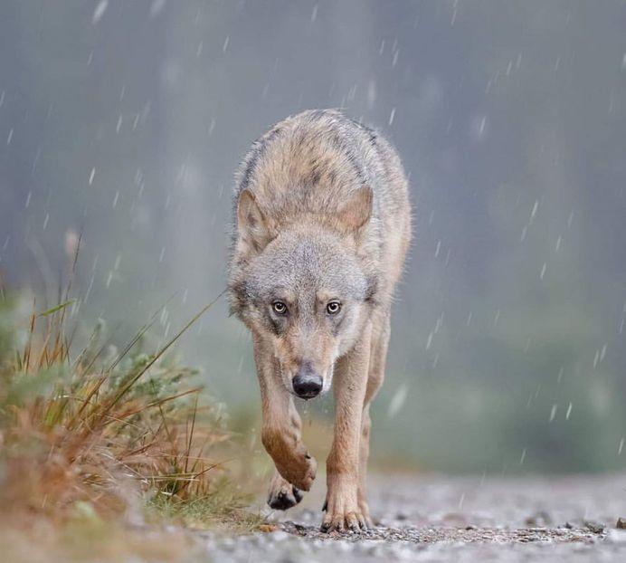 Breathtaking Close-Up Portraits of Wild Animals by Ina Schieferdecker