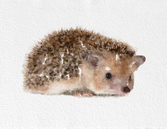 Hedgehog Painting #watercolor #hedgehog