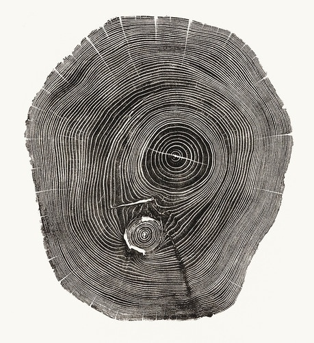 4 | Beautiful Photos Of Tree Rings Remind Us To Slow Down A Little | Co.Exist: World changing ideas and innovation #line #white #tree #black #photograph #and
