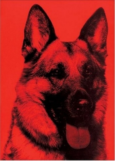 sagmeister-made-you-look.jpg (JPEG Image, 450x628 pixels) #dog #book #cover #animal #sagmeister