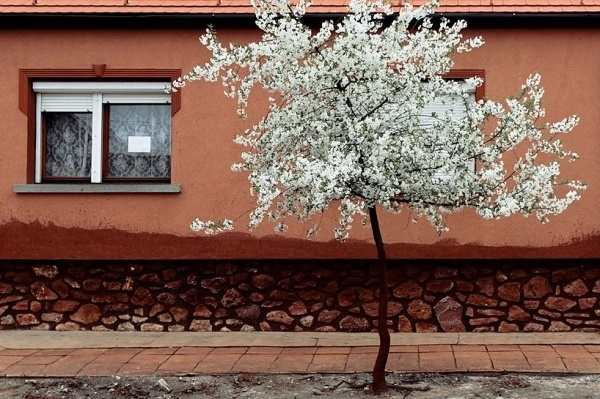 photographs capture town stained red by hungary's 2010 toxic waste spill #photography #tree