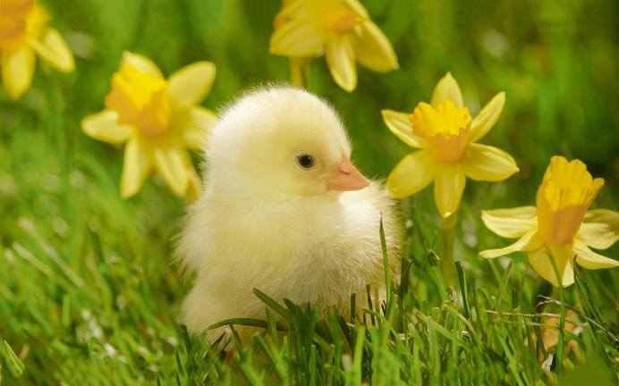 Cute Chick #inspiration #photography #art