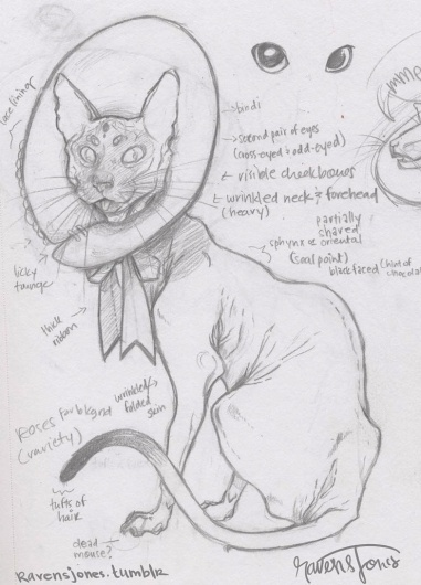 tumblr_m4lcmfdCO71r1iid8o1_1280.jpg (784×1088) #jones #drawing #cat #concept #traditional #monster #pencil #raven #sketch