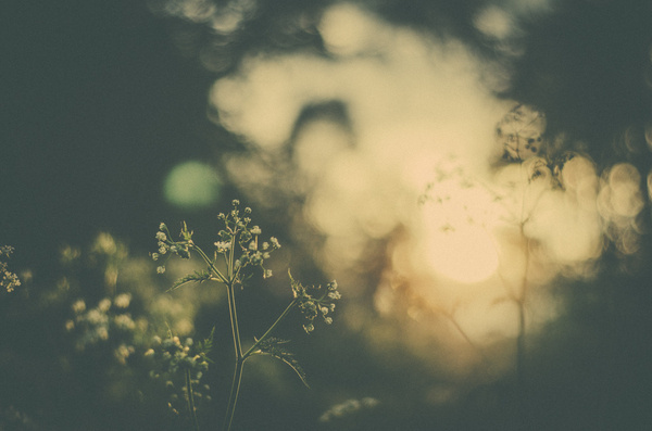 GO 70° NORTH #warm #photography #nature #dreamy #vintage