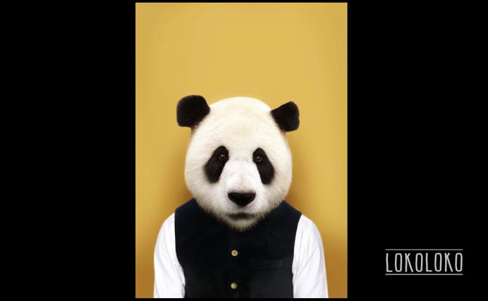 #bear #panda #minimal #poster #yellow  Poster realizado para lokoloko.es