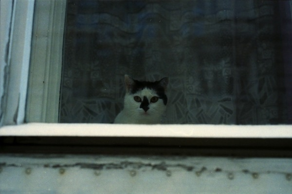 Schaufenster | Triangular Love. #white #cat #black #vienna #and #window