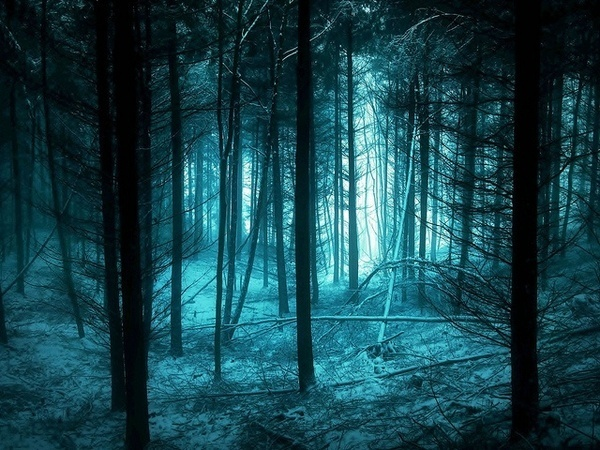 Beautiful Forest Photography #inspiration #photography #nature