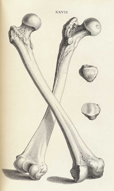 animal anatomy | Planet Open Knowledge Foundation #bones
