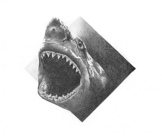 Illustrations Vol.2 on the Behance Network #illustration #pogo #shark