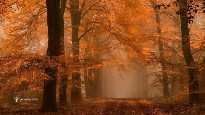 Mysterious Nature Photography by Lars van de Goor