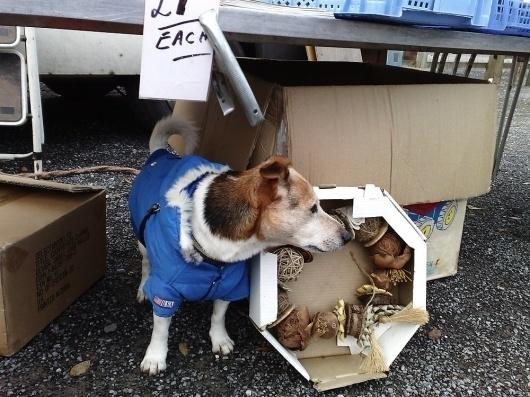 websitesarelovely: comedy #photography #dog