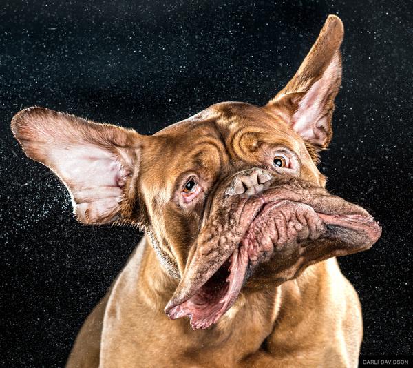 Carli Davidson SHAKE BOOK 1 #shake #photography #dogs