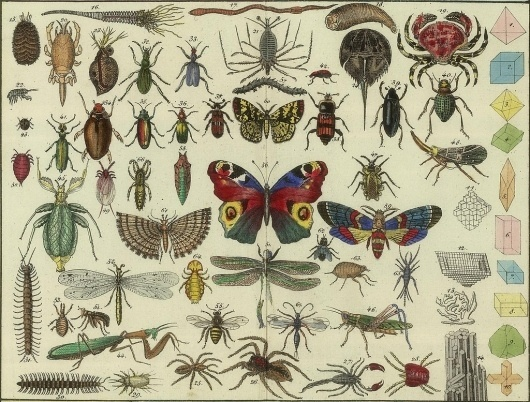 All sizes | Tableau d'histoire naturelle Annelides, Crustaces, Arachnides, etc, 1834 (detail) | Flickr - Photo Sharing! #infographic #bugs #poster