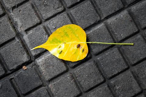 IG056 #leaf