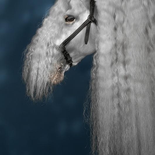 basic_sounds #photography #horse #portrait