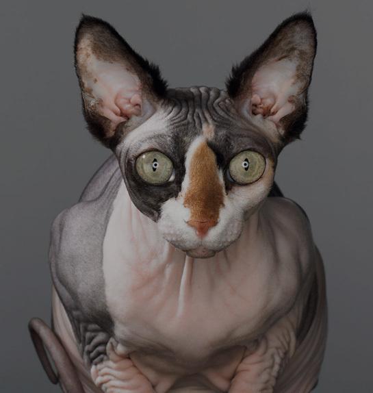 newbuildwebsite.jpg #photography #cat