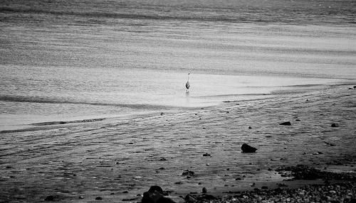 Elephantshoeprints   Affordable Freelance Design #white #ulverston #black #digital #photography #sand #and #beach #england
