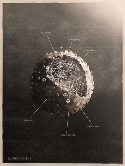 The Collective Loop #nucleus #mrk #posters