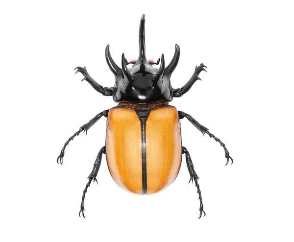 Main #beetle #bug #white