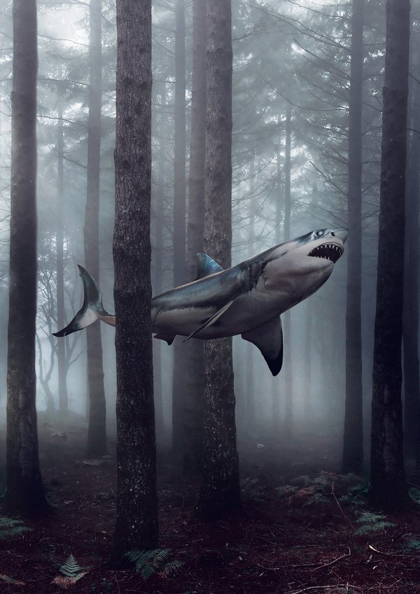 All sizes | Untitled | Flickr - Photo Sharing! #white #nightmare #great #fish #shark #surreal #forest #swimming #trees