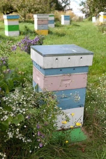 _=SHMU=_=Photography=__Hall's Honey Bees Photography #halls #honey #bees