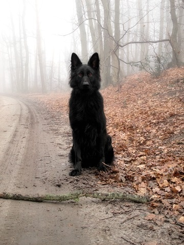 FFFFOUND! #black #dog