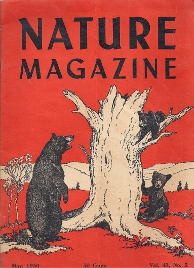 Nature Magazine / 1950 #1950 #illustration #nature #bear #magazine