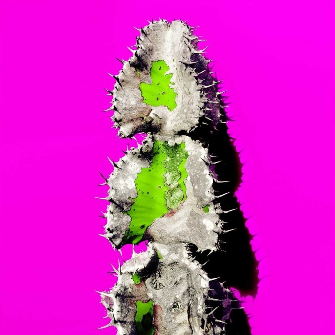 Minimalist and Colorful Cactus Photography by Evgeniya Porechenskaya
