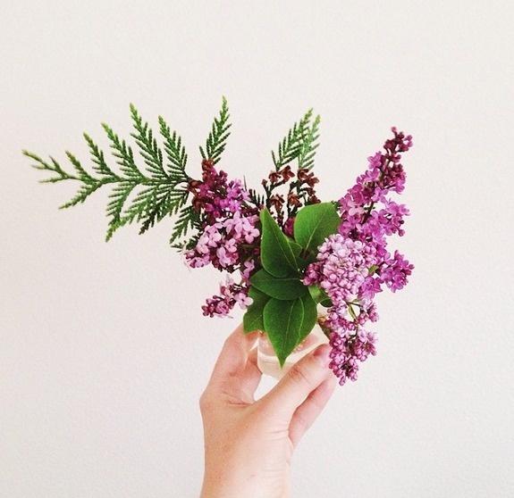 plant, flower, photo