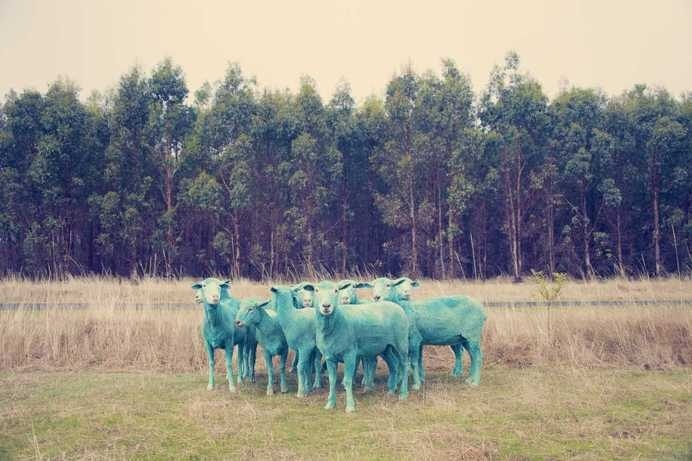 The Dream Series by Gray Malin #inspiration #photography #animal