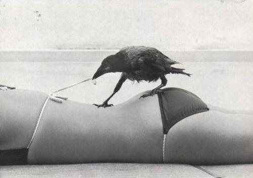 Zpi7S.jpg (500×353) #bikini #photography #crow