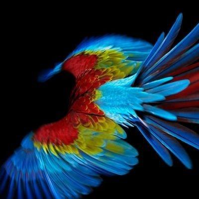 Perroquet 00.jpg, oct 2008 #photography #parrot #bird