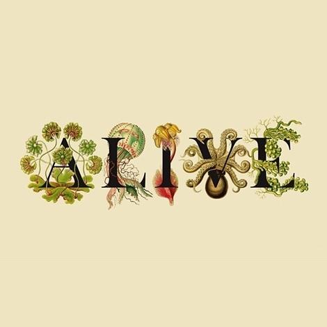 iainclaridge.net   Page 7 #illustration #typography