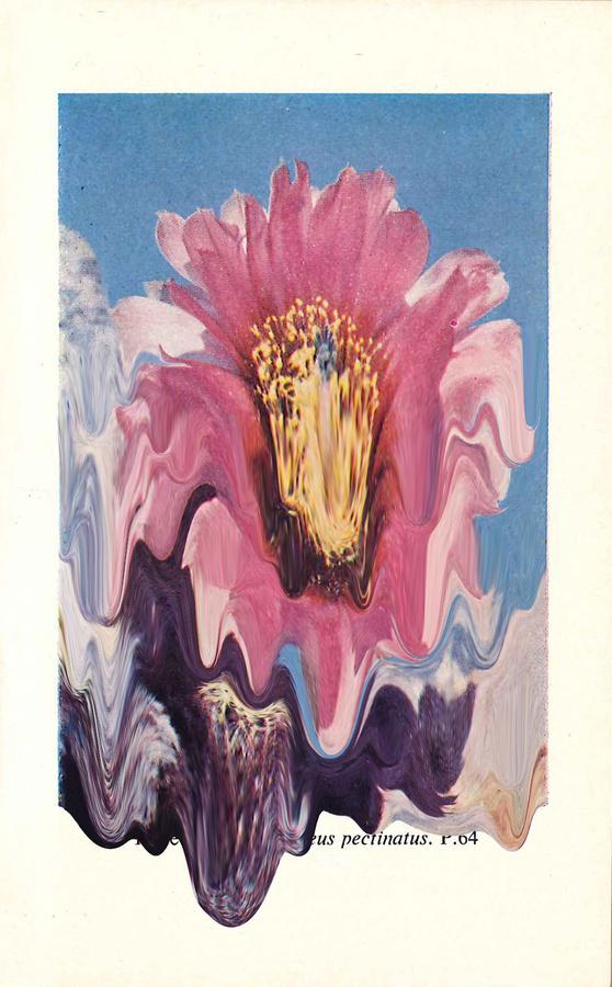 Plate 33. Echinocereus Pectinatus #print #cacti #tanimura #hana #succulents #paint #melting #flower #cactus #plant