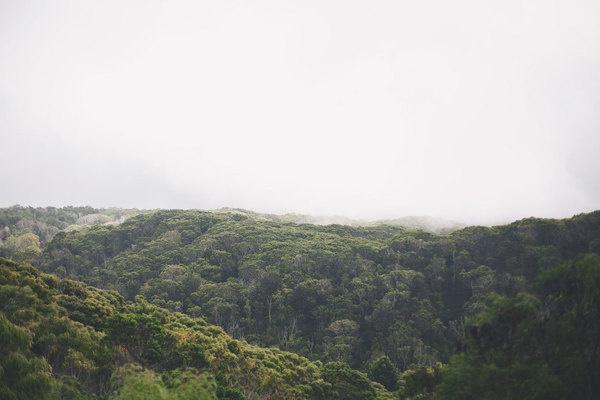 Waimea Rainforest 8 x 10 print #cloud #muted #color #rainforest #landscape #hawaii #photography #rain #nature #forest #trees #green
