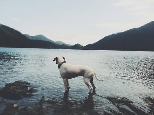 Likes | Tumblr #lake #dow #mountain #water