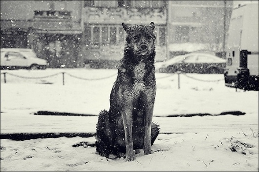 Victor Eredel | PHOTO DONUTS DAILY INSPIRATION PHOTOGRAPHY #patience #winter #loyalty #photography #dog