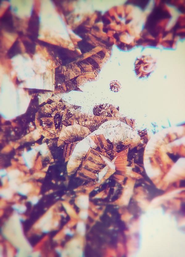 atelier olschinsky #illustration #photography #metamorphose