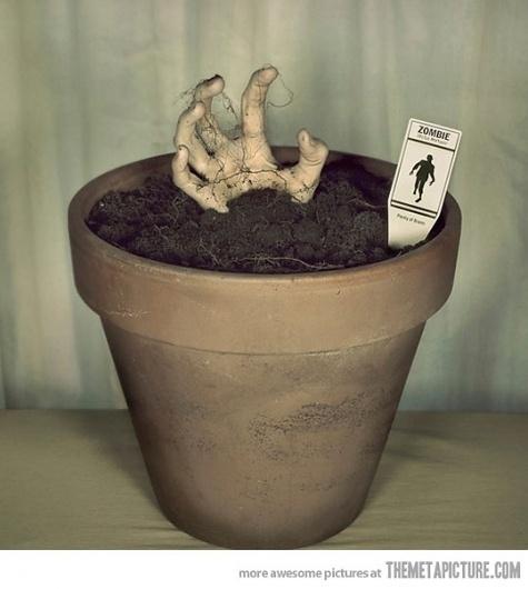 Grow your own zombie #zombie #grow #pot